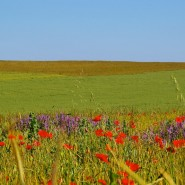 cercey_paysage_coquelicots2
