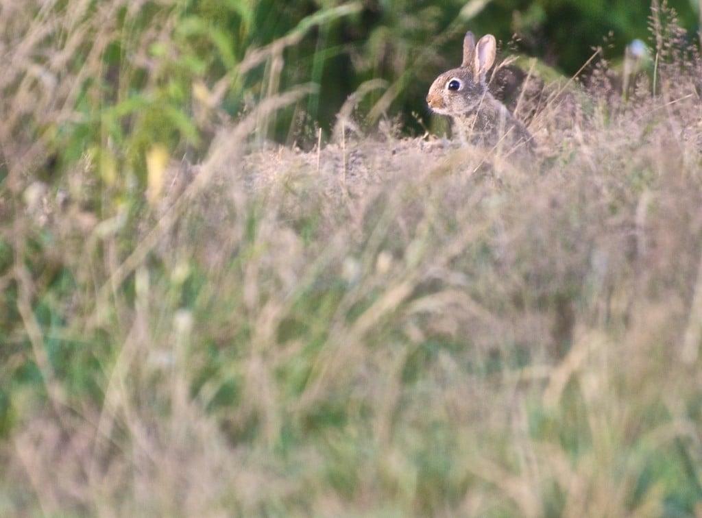 Mon super d fi suivre les aventures d 39 un clan de lapins - Cuisiner un lapin de garenne ...