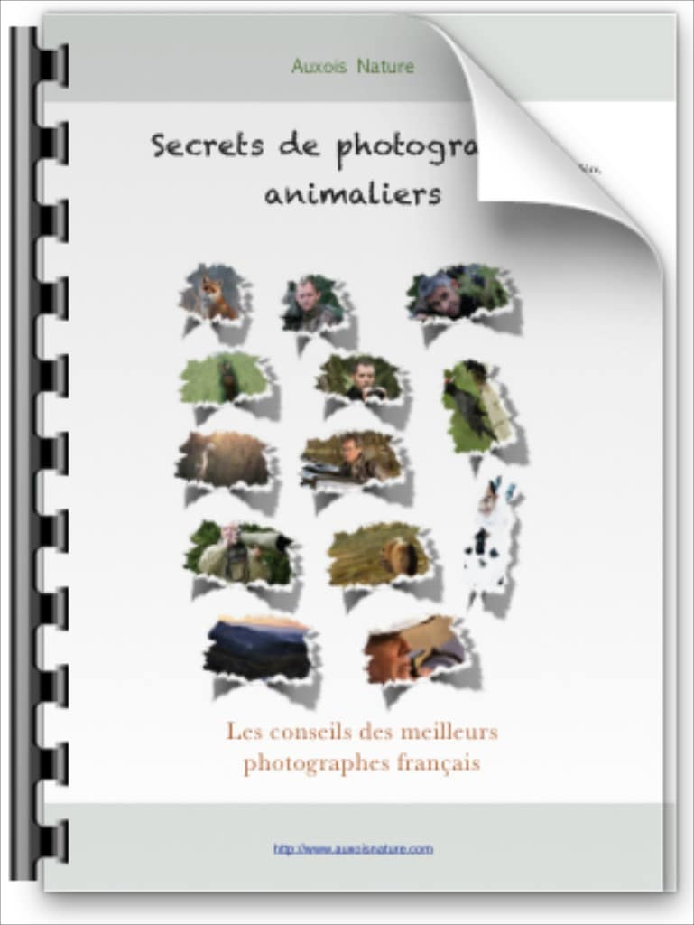 Secrets de photographes animaliers