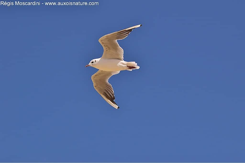 Comment faire pour photographier un oiseau en vol – Partie 1