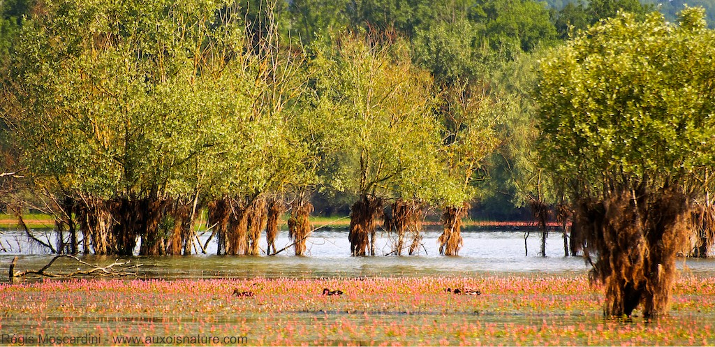 photo ambiance lac de cercey