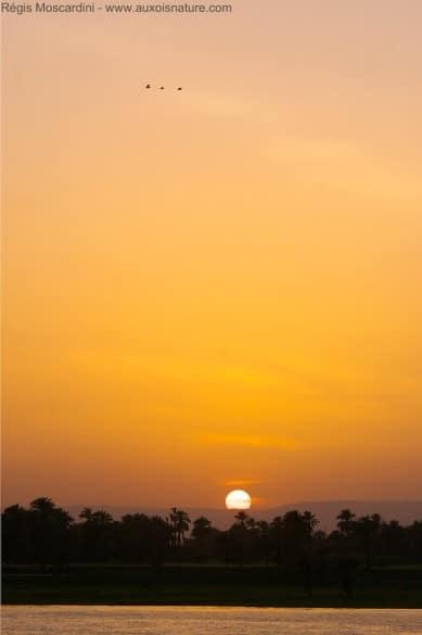 coucher de soleil sur le nil 389x585 5 principes de base à appliquer en photo animalière