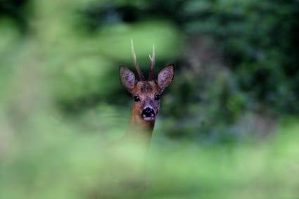 [Podcast #6] Philippe Moës, photographe animalier spécialiste de la forêt