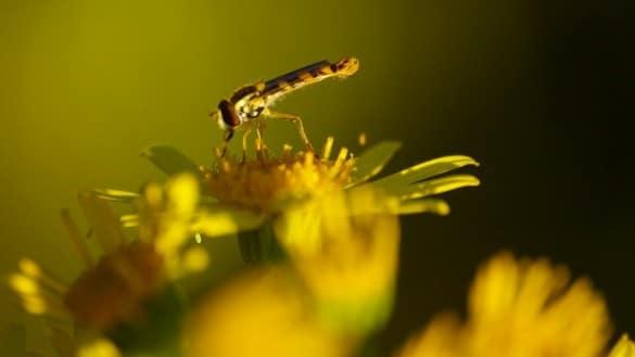 plante insecte soleil
