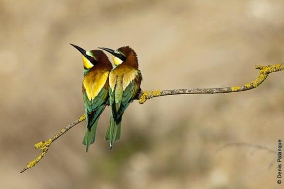 photographe nature denis palanque