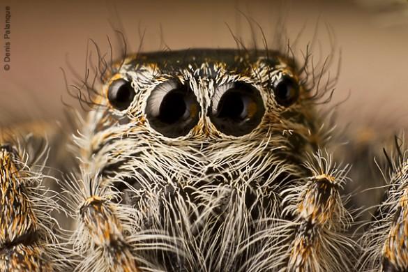 photographe-nature-denis-palanque