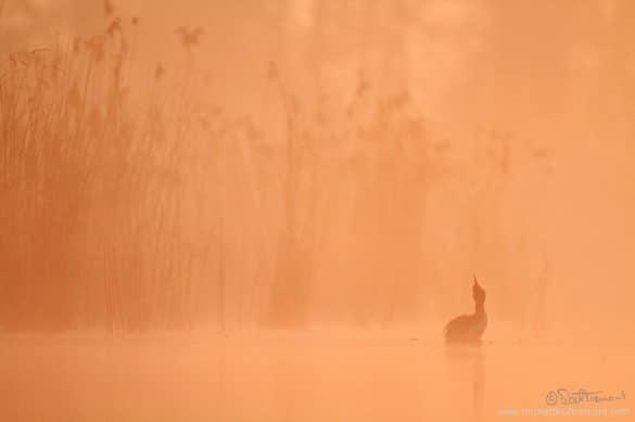 Michel_d_oultremont_photographe_animalier_belge1