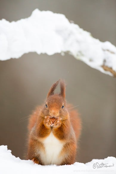 Michel_d_oultremont_photographe_animalier_belge3