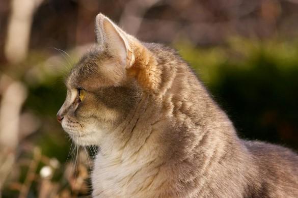 chat domestique 585x389 Quel est lobjectif idéal pour la photo animalière ?
