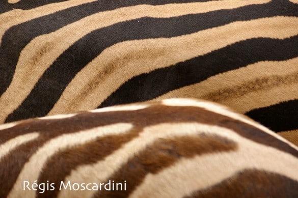 zoo palmyre7 585x389 [La Boite à Photos] Comment réussir un portrait dans un parc animalier