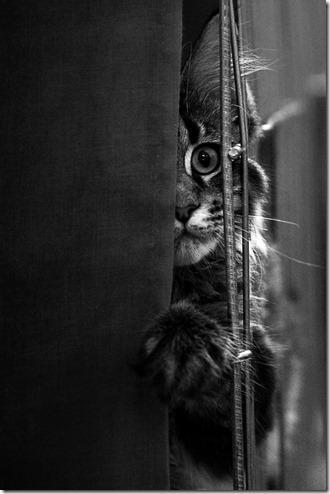 chat 4 10 astuces pour photographier votre animal de compagnie