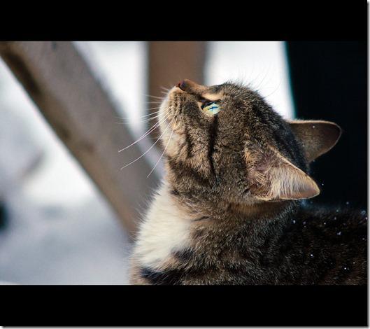 chat 10 astuces pour photographier votre animal de compagnie
