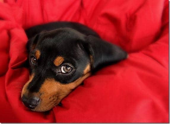 chien 2 10 astuces pour photographier votre animal de compagnie
