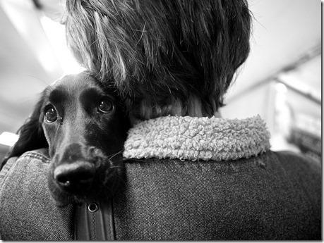 chien 4 10 astuces pour photographier votre animal de compagnie