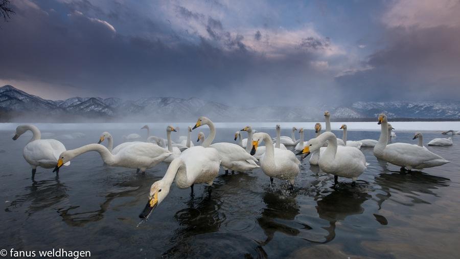 Comment photographier les animaux sauvages dans leur environnement
