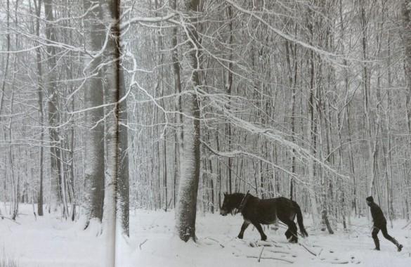 cheval vapeur 5 585x380 Réaliser un reportage photo avec le livre Cheval Vapeur
