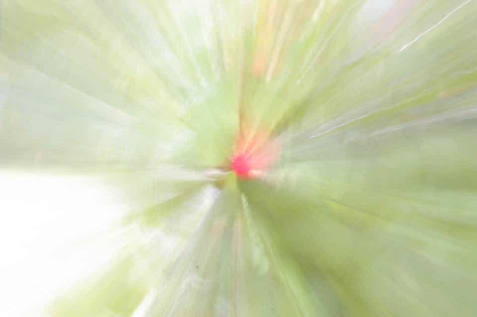 explozoom 1 1 5 astuces pour faire de la photographie nature abstraite