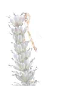 photo abstraite insecte surexposé-1