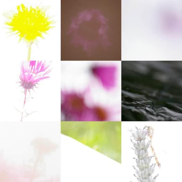 montage abstrait 9 585x585 5 astuces pour faire de la photographie nature abstraite
