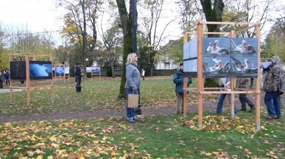 public festival photo montier en der 585x327 [Vidéo] Interview au festival de photographie animalière à Montier en Der