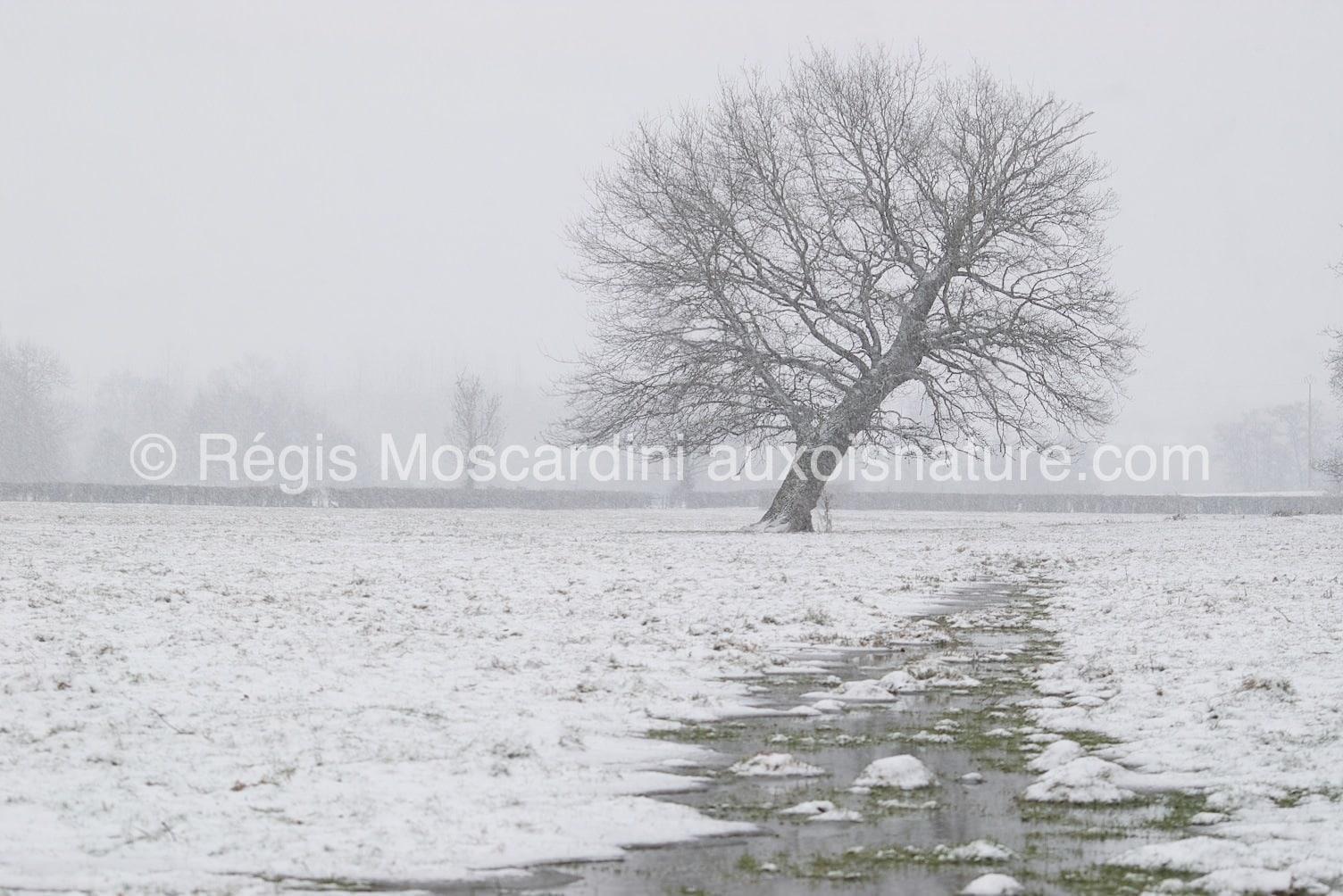 7 astuces pour la photographie animalière en hiver