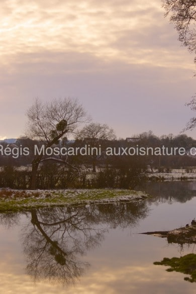 arbre reflet hiver 390x585 7 astuces pour la photographie animalière en hiver