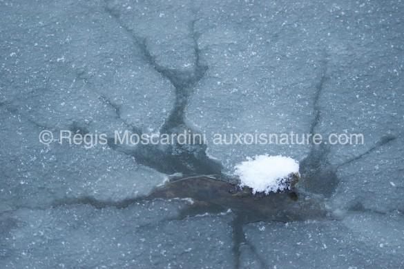 glace neige 585x390 7 astuces pour la photographie animalière en hiver