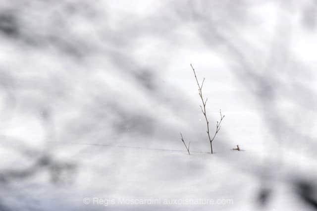 flou branches 1 10 questions essentielles à se poser en photo animalière