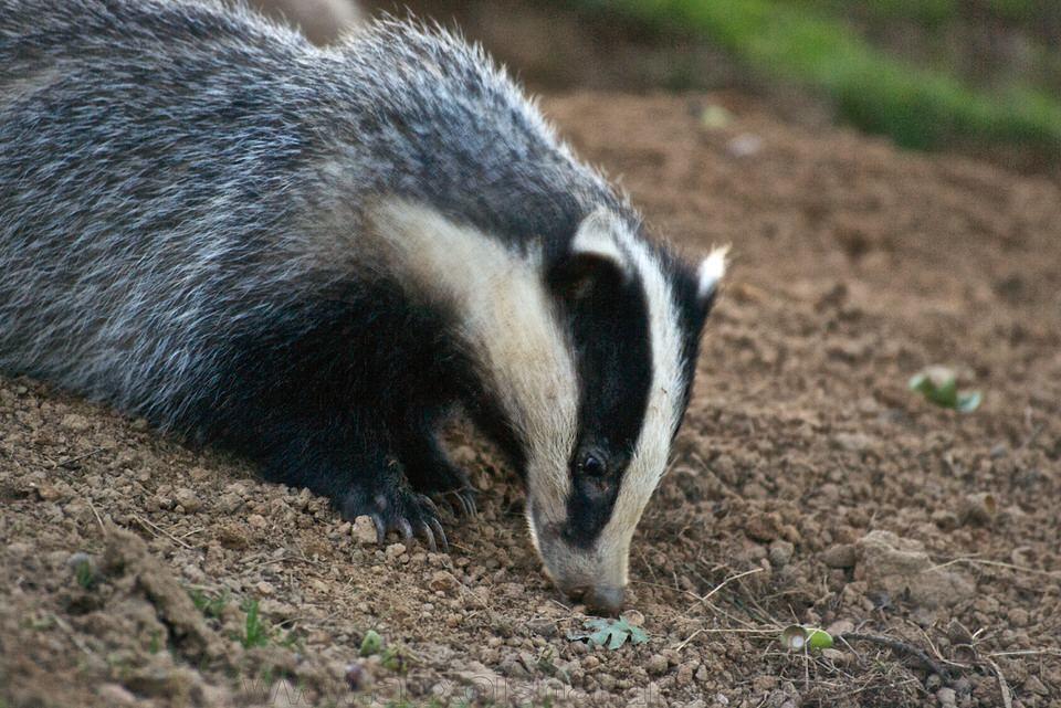 5 conseils pour photographier les animaux avec peu de lumière