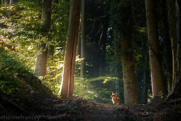 [Podcast] Interview de Sébastien et Etienne Francey : jeunes photographes animaliers