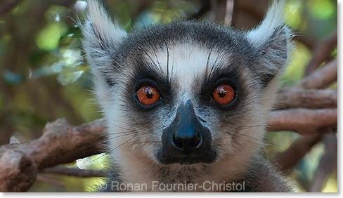Madagascar : le dernier film inédit de Ronan Fournier-Christol