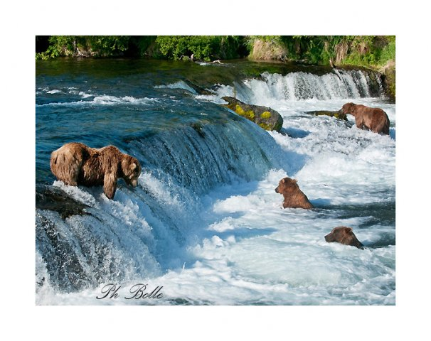 alaska philippe bolle [Podcast #21] Philippe Bolle, un photographe animalier grand voyageur