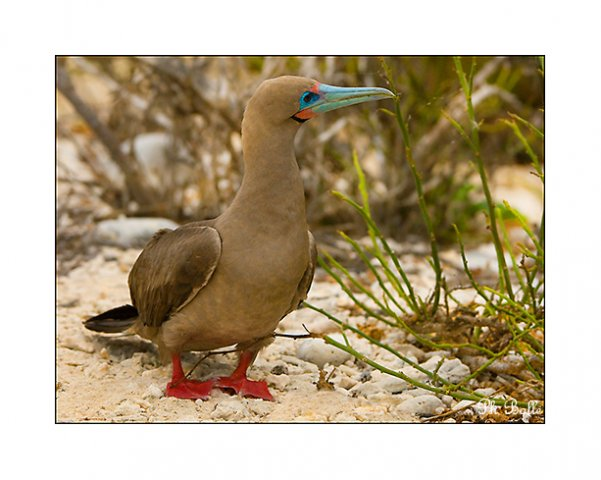 galapagos1 philippe bolle [Podcast #21] Philippe Bolle, un photographe animalier grand voyageur