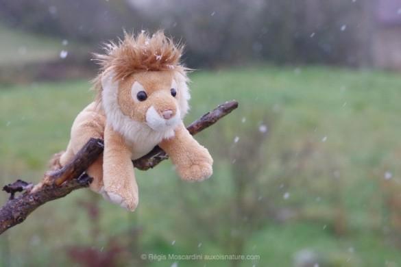 lion 2 585x390 Comment photographier avec des hautes sensibilités ?