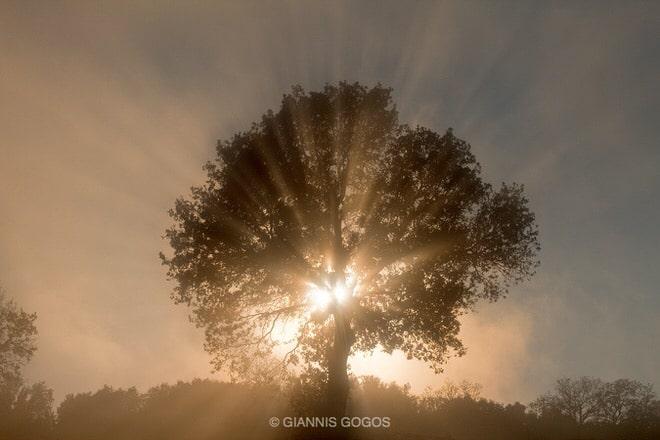 © GIANNIS GOGOS