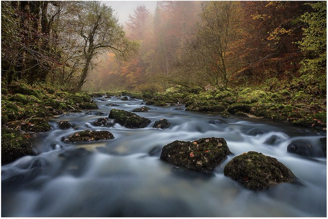 cyrille_grillere_photo_nature6
