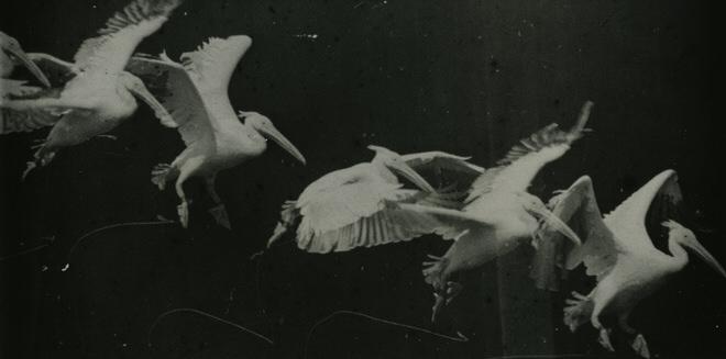 Historique de la photographie animalière