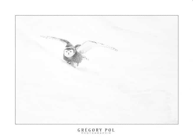 gregory-pol6