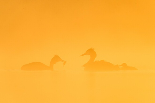 phoca_thumb_l_oiseaux_etang-28-1
