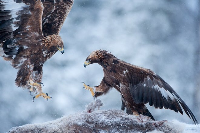 Copyright : © Stefano Unterthiner, tous droits réservés