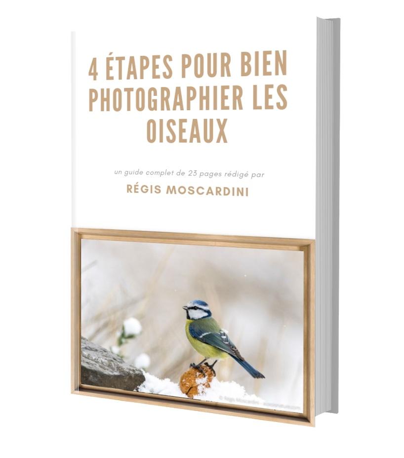 photographier les oiseaux