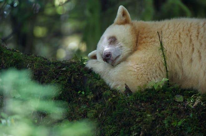 [Podcast #29] Jean-Marie Séveno, photographe d'animaux rares