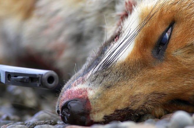 Top 10 des photographes animaliers dans le monde – Partie 1