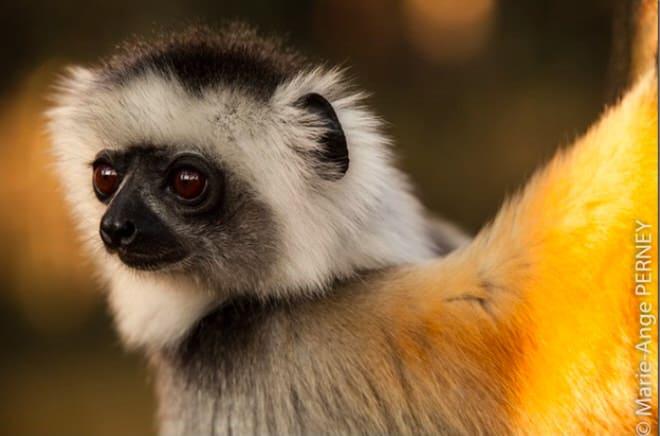 Le portrait animalier : en route pour Madagascar