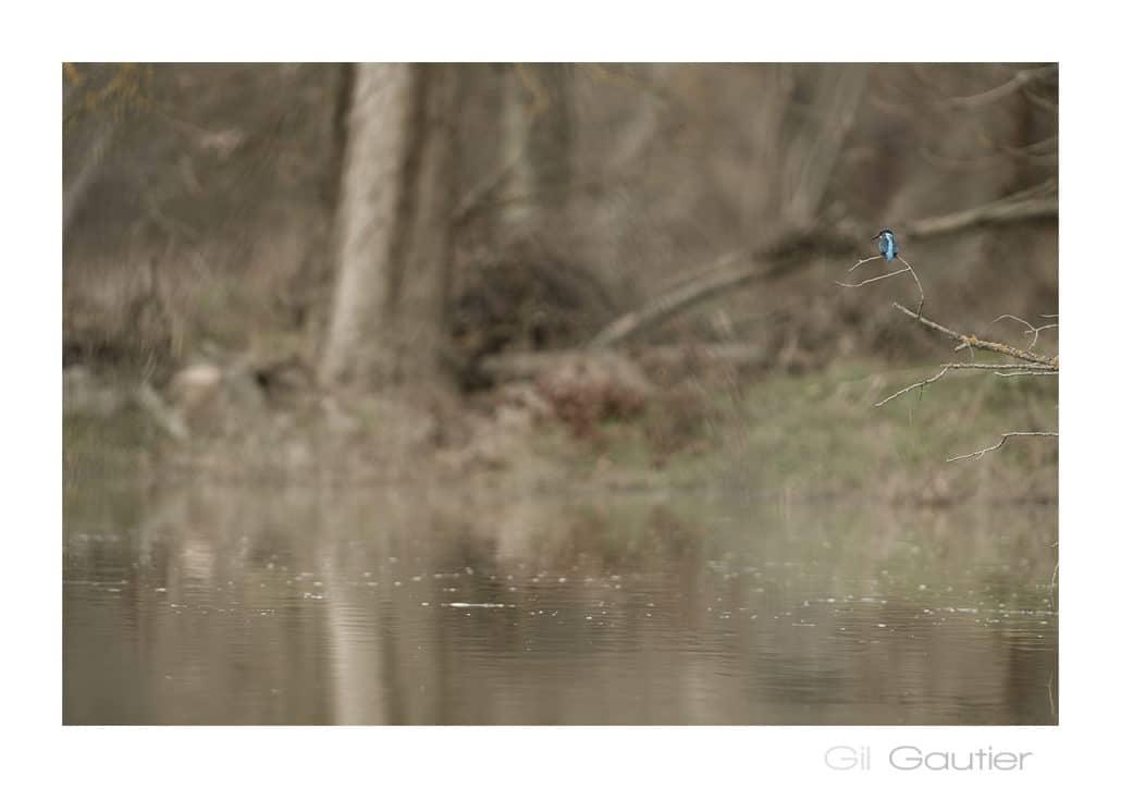 perchoir martin pêcheur