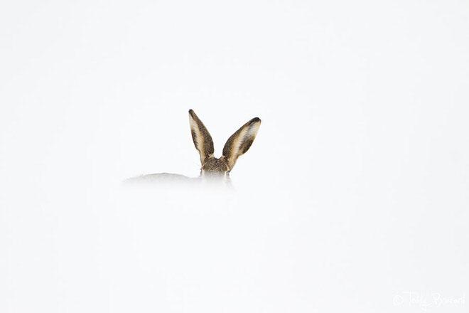 teddy_bracard_photographe_animalier3