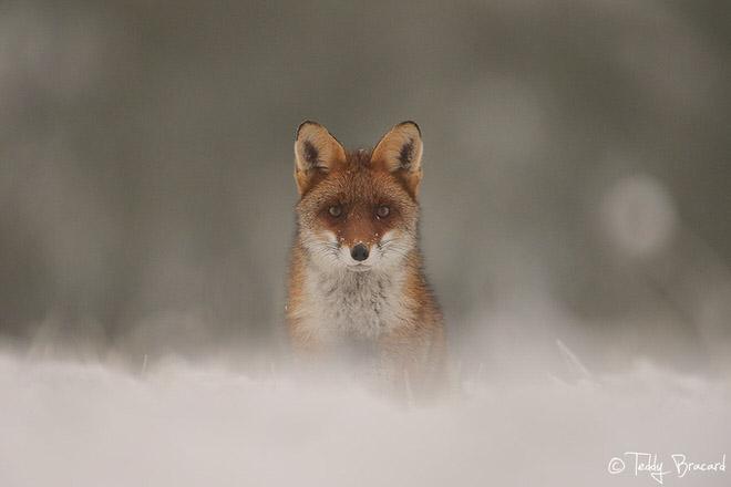 teddy_bracard_photographe_animalier7