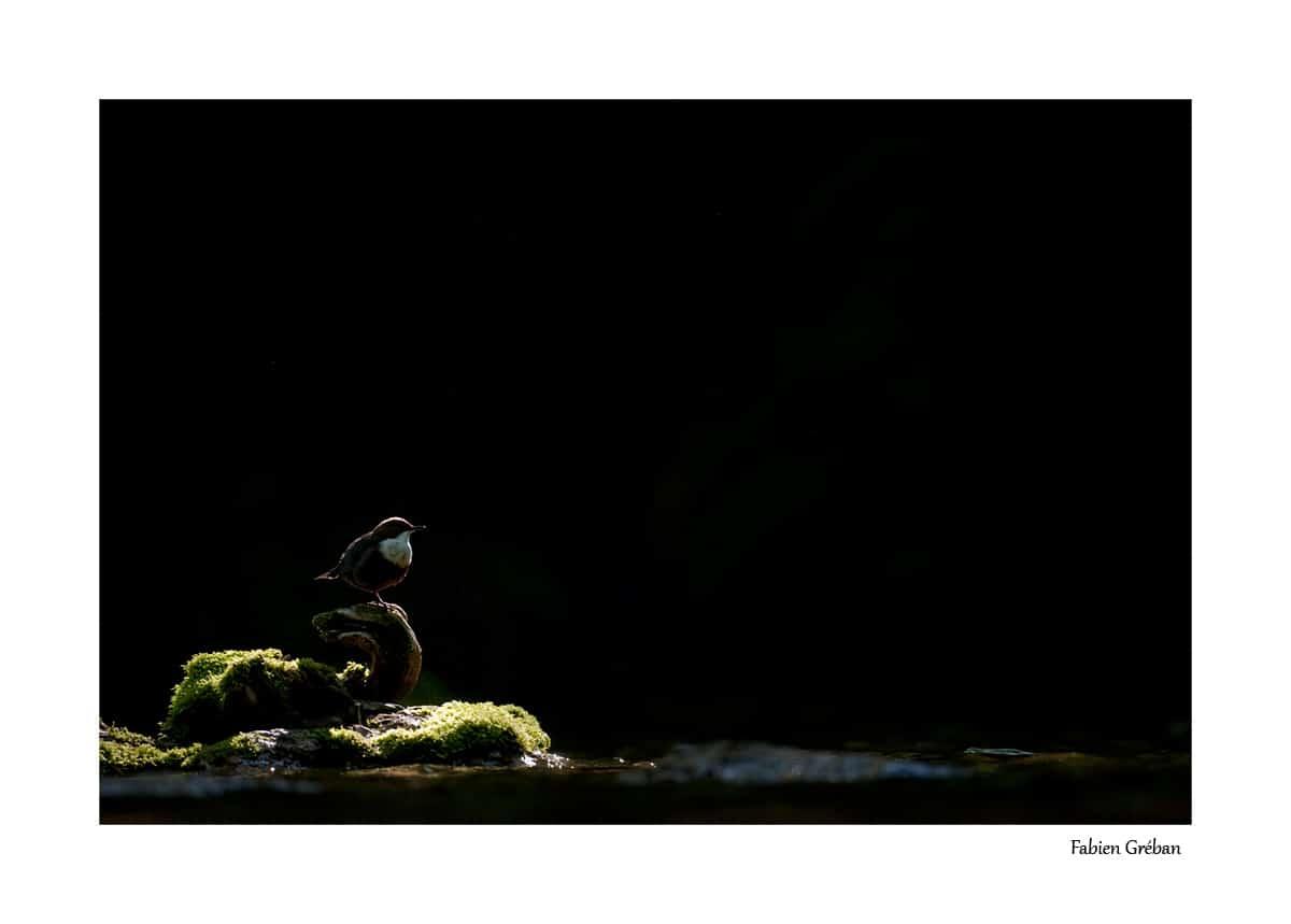 Fabien Gréban - photographe animalier