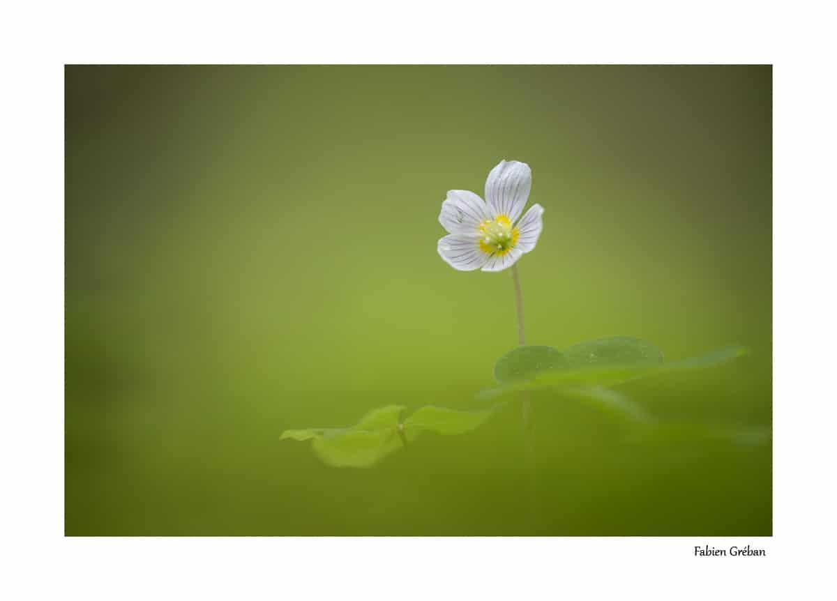 Photographier les fleurs pour mieux photographier les animaux