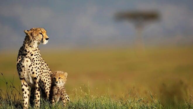Safari Photo kenya 4